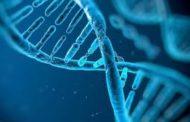 دراسة:الجينات هي
