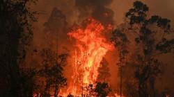 حرائق الغابات في أستراليا تصل ضواحي سيدني