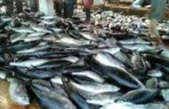 القطاع السمكي اليمني .. خمس سنوات من العدوان والصمود